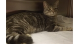 La Crescent Animal Rescue Pet Of The Week: Andy