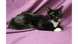 Eau Claire County Humane Association Pet Of The Week: Gus